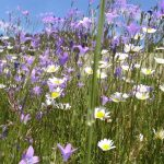 Blog –Symbolbild Blumenwiese
