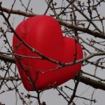 Tiergespräch aus der Ferne – Herz zu Herz