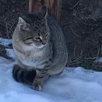 Kennenlern-Angebot Lichtpfoten – Symbolbild mit einer Katze